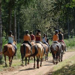 Pour ceux qui aiment les chevaux