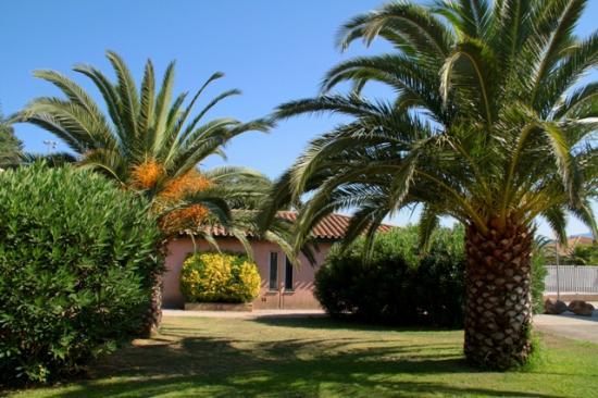 Ses palmiers
